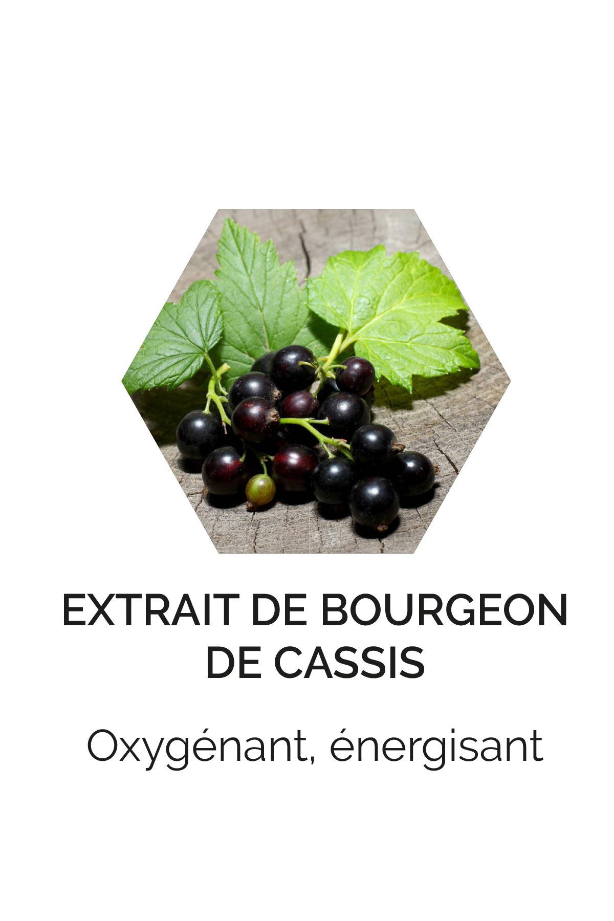 Extraits de bourgeons de cassis